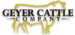 Geyer Cattle Company  |  DeSmet, South Dakota
